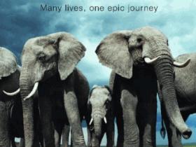 【bbc纪录片】【生命故事Life Story.2014.6集】【1080P】 【29GB】